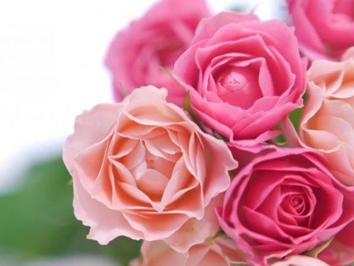 切り花を長持ちさせる方法。花の種類に適した水の量とお手入れのコツ