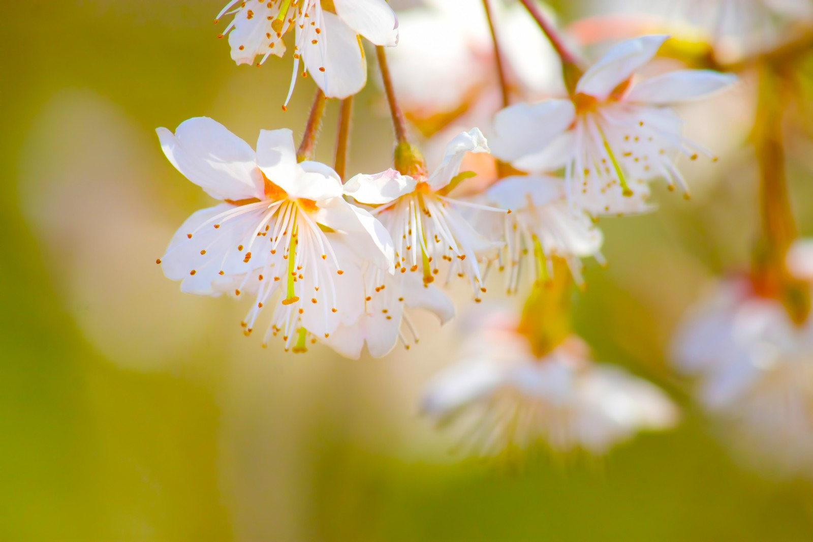 上野の桜を見に行ったら寄るべき見所。東京国立博物館春恒例イベント