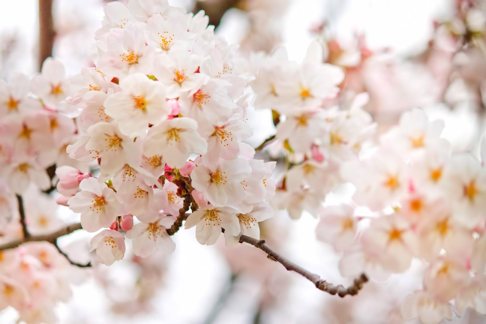 上野公園のお花見で買い出しができるお店5選と飲料配達利用のすすめ