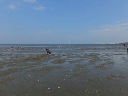 千葉の潮干狩り場