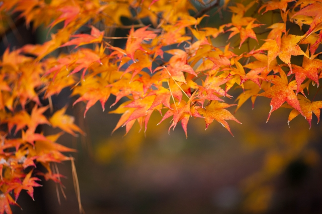鎌倉の紅葉穴場5選!写真撮影にもおすすめの静寂に包まれたお寺