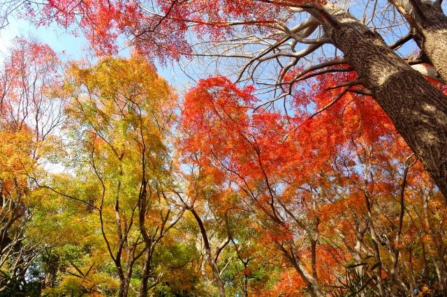 鎌倉のハイキング紅葉の時期なら獅子舞を通る天園コースがおすすめ!