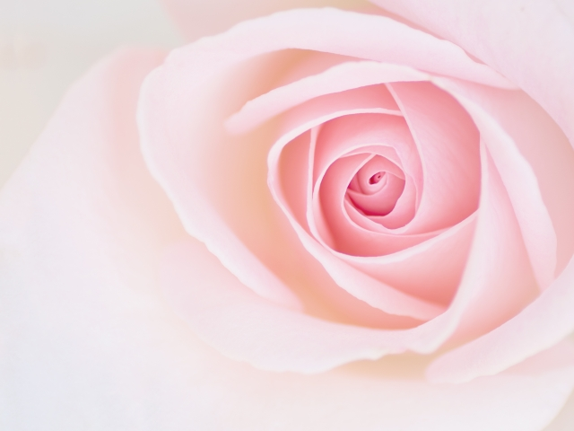 本物のバラっぽい香水が欲しい!女性向けのローズの香りおすすめ5選